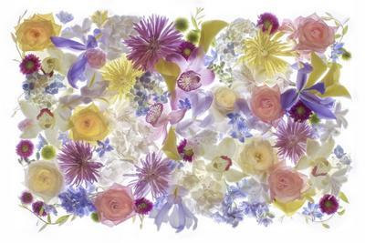 https://imgc.allpostersimages.com/img/posters/usa-florida-floral-bounty_u-L-Q1D0S870.jpg?p=0