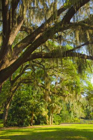 https://imgc.allpostersimages.com/img/posters/usa-florida-tropical-garden-with-palm-trees-and-living-oak-covered-in-spanish-moss_u-L-Q1H22PG0.jpg?artPerspective=n