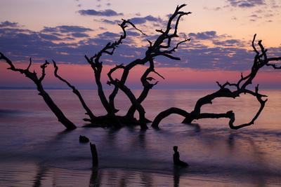 https://imgc.allpostersimages.com/img/posters/usa-georgia-jekyll-island-driftwood-beach-at-sunrise_u-L-PXRSAU0.jpg?p=0