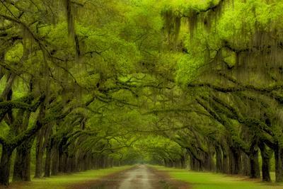 https://imgc.allpostersimages.com/img/posters/usa-georgia-savannah-drive-at-historic-wormsloe-plantation_u-L-PXRSB20.jpg?artPerspective=n