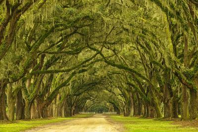 https://imgc.allpostersimages.com/img/posters/usa-georgia-savannah-mile-long-oak-drive_u-L-Q1D0MER0.jpg?p=0