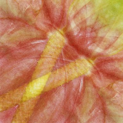 https://imgc.allpostersimages.com/img/posters/usa-hawaii-anthurium-flower-montage_u-L-PU3DCO0.jpg?p=0