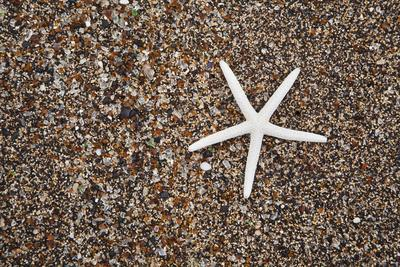 https://imgc.allpostersimages.com/img/posters/usa-hawaii-kauai-starfish-skeleton-on-glass-beach_u-L-Q1D0POV0.jpg?p=0