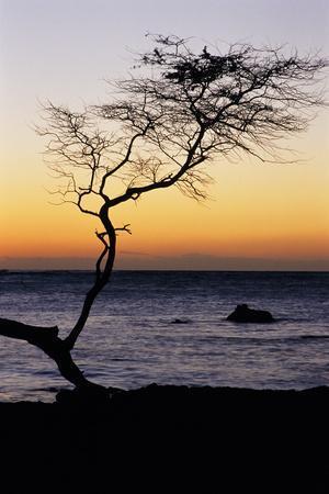 https://imgc.allpostersimages.com/img/posters/usa-hawaii-tree-silhouette-at-twilight_u-L-PU3E3C0.jpg?p=0