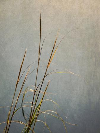 https://imgc.allpostersimages.com/img/posters/usa-massachusetts-cape-cod-dew-covered-reeds-at-sunrise-texture-overlay_u-L-Q1D0NND0.jpg?p=0
