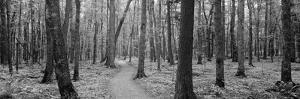 Usa, Michigan, Black River National Forest, Walkway Running Through a Forest