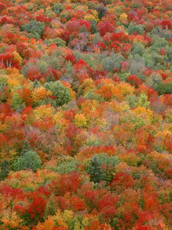 https://imgc.allpostersimages.com/img/posters/usa-minnesota-superior-national-forest-autumn-adds-color-to-northern-hardwood-forests_u-L-Q12T4FR0.jpg?p=0