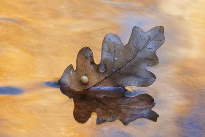 https://imgc.allpostersimages.com/img/posters/usa-new-mexico-oak-leaf-in-stream-at-ghost-ranch_u-L-PU3FPU0.jpg?p=0