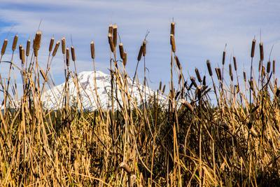 https://imgc.allpostersimages.com/img/posters/usa-oregon-lava-lake-cattails-in-foreground-broken-top-mountain-in-background_u-L-Q1H253Y0.jpg?artPerspective=n