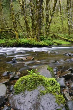 https://imgc.allpostersimages.com/img/posters/usa-oregon-tillamook-state-forest-scenic-of-wilson-river_u-L-Q12SZIU0.jpg?p=0