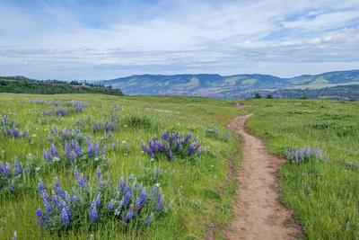 https://imgc.allpostersimages.com/img/posters/usa-oregon-tom-mccall-nature-preserve-rowena-plateau-trail_u-L-Q1H24IZ0.jpg?artPerspective=n