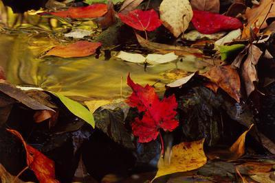https://imgc.allpostersimages.com/img/posters/usa-pennsylvania-pocono-mountains-autumns-leaves-in-stream_u-L-PU3GGI0.jpg?p=0