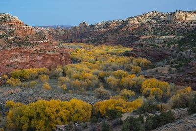 https://imgc.allpostersimages.com/img/posters/usa-utah-autumn-cottonwoods-and-sandstone-formations-in-canyon-grand-staircase-escalante-nm_u-L-Q1H25DC0.jpg?artPerspective=n