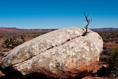 https://imgc.allpostersimages.com/img/posters/usa-utah-bluff-creosote-bush-growing-from-boulder_u-L-Q1H24KR0.jpg?artPerspective=n