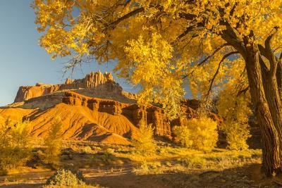 https://imgc.allpostersimages.com/img/posters/usa-utah-capitol-reef-national-park-cottonwood-trees-and-the-castle-rock-formation_u-L-Q1H24GK0.jpg?artPerspective=n