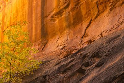 https://imgc.allpostersimages.com/img/posters/usa-utah-grand-staircase-escalante-national-monument-slot-canyon-cliff-and-tree-in-autumn_u-L-Q1H24VJ0.jpg?artPerspective=n