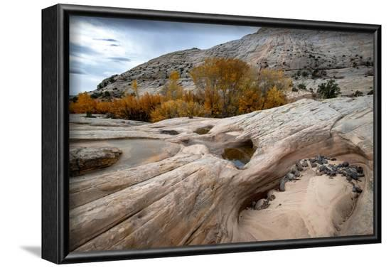 USA, Utah. Waterpockets and autumnal cottonwood trees, Grand Staircase-Escalante National Monument.-Judith Zimmerman-Framed Photographic Print