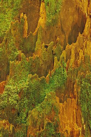 https://imgc.allpostersimages.com/img/posters/usa-washington-olympic-national-park-hemlock-tree-bark-with-moss_u-L-PU3GJF0.jpg?p=0
