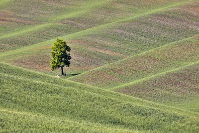 https://imgc.allpostersimages.com/img/posters/usa-washington-state-palouse-single-tree-in-a-field-in-the-town-of-colton_u-L-Q1H24T10.jpg?artPerspective=n