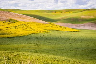 https://imgc.allpostersimages.com/img/posters/usa-washington-state-palouse-valley-fields-of-yellow-mustard-and-other-crops_u-L-Q1H230T0.jpg?artPerspective=n