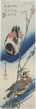 Ducks and Reeds, 1834-1839 by Utagawa Hiroshige