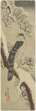 Hawk on Pine Branch, Winter, Early 19th Century by Utagawa Hiroshige