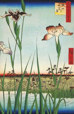 Irises at Horikin from One Hundred Famous Views of Edo by Utagawa Hiroshige