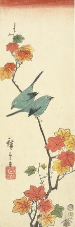 Japanese White-Eyes on a Maple Branch, 1854 by Utagawa Hiroshige