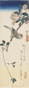 Java Sparrow and Magnolia, 1834-1839 by Utagawa Hiroshige