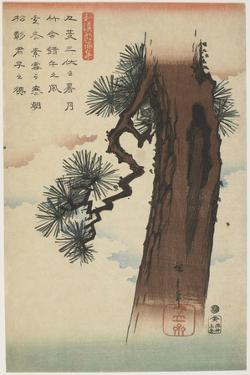 Pine Tree, 1837-1844 by Utagawa Hiroshige