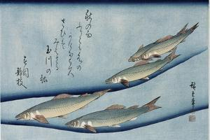 Rivertrout', from the Series 'Collection of Fish' by Utagawa Hiroshige