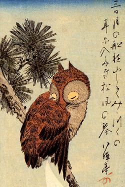 Utagawa Hiroshige Small Brown Owl on a Pine Branch Plastic Sign