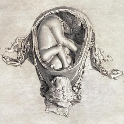 https://imgc.allpostersimages.com/img/posters/uterus-with-fetus-illustration-1774_u-L-PYYGIU0.jpg?artPerspective=n