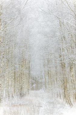 Path Through Winter Forest Gunnebo Kulturreservat, Mölndal, Sweden, Europe by Utterstr?m Photography