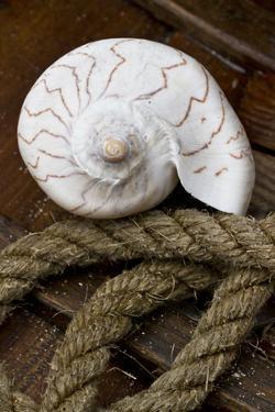Conch on Wood by Uwe Merkel