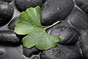 Ginko Leaf on Black Stones by Uwe Merkel