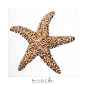 Maritime Still Life with Starfish by Uwe Merkel
