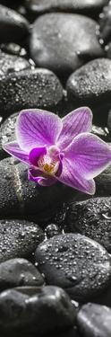 Orchid Blossom on Black Stones by Uwe Merkel
