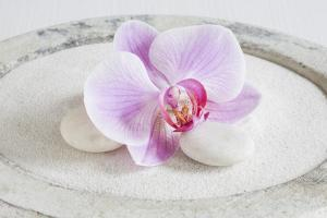 Orchid Blossom on White Sand by Uwe Merkel