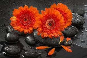 Red Blossoms on Black Stones by Uwe Merkel