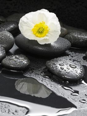 White Blossom on Black Stones by Uwe Merkel