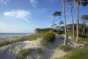 Beech Forest and Dunes on the Western Beach of Darss Peninsula by Uwe Steffens