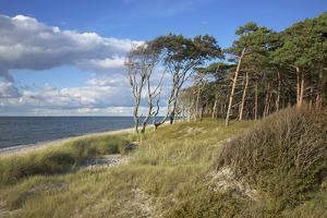 Coastal Forest on the Western Beach of Darss Peninsula by Uwe Steffens
