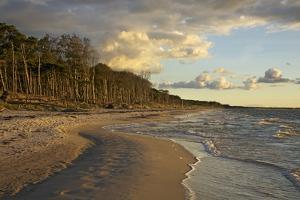 Evening Light over the Western Beach of Darss Peninsula by Uwe Steffens
