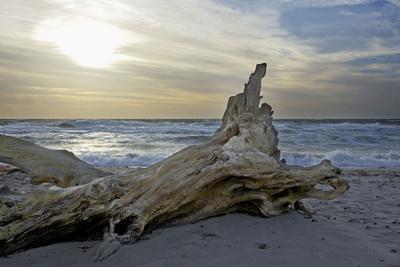Evening on the Western Beach of Darss Peninsula