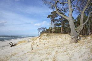 Forest and Dunes on the Western Beach of Darss Peninsula by Uwe Steffens