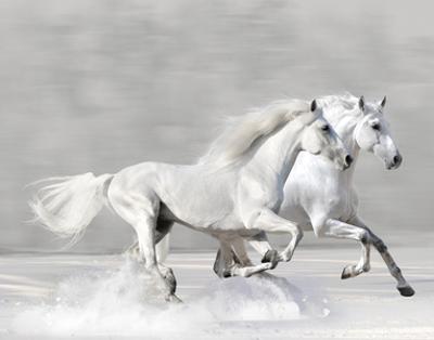 Winter Gallop by V. Makarova