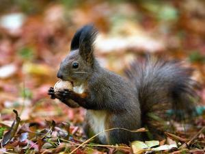 A Squirrel Handles a Nut Received from a Child in a Park in Bucharest, Romania November 6, 2006 by Vadim Ghirda
