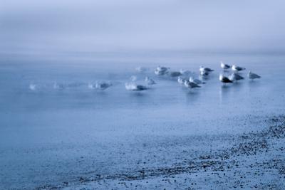 Blue birds by Valda Bailey