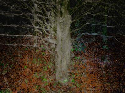Enchanted Forest by Valda Bailey